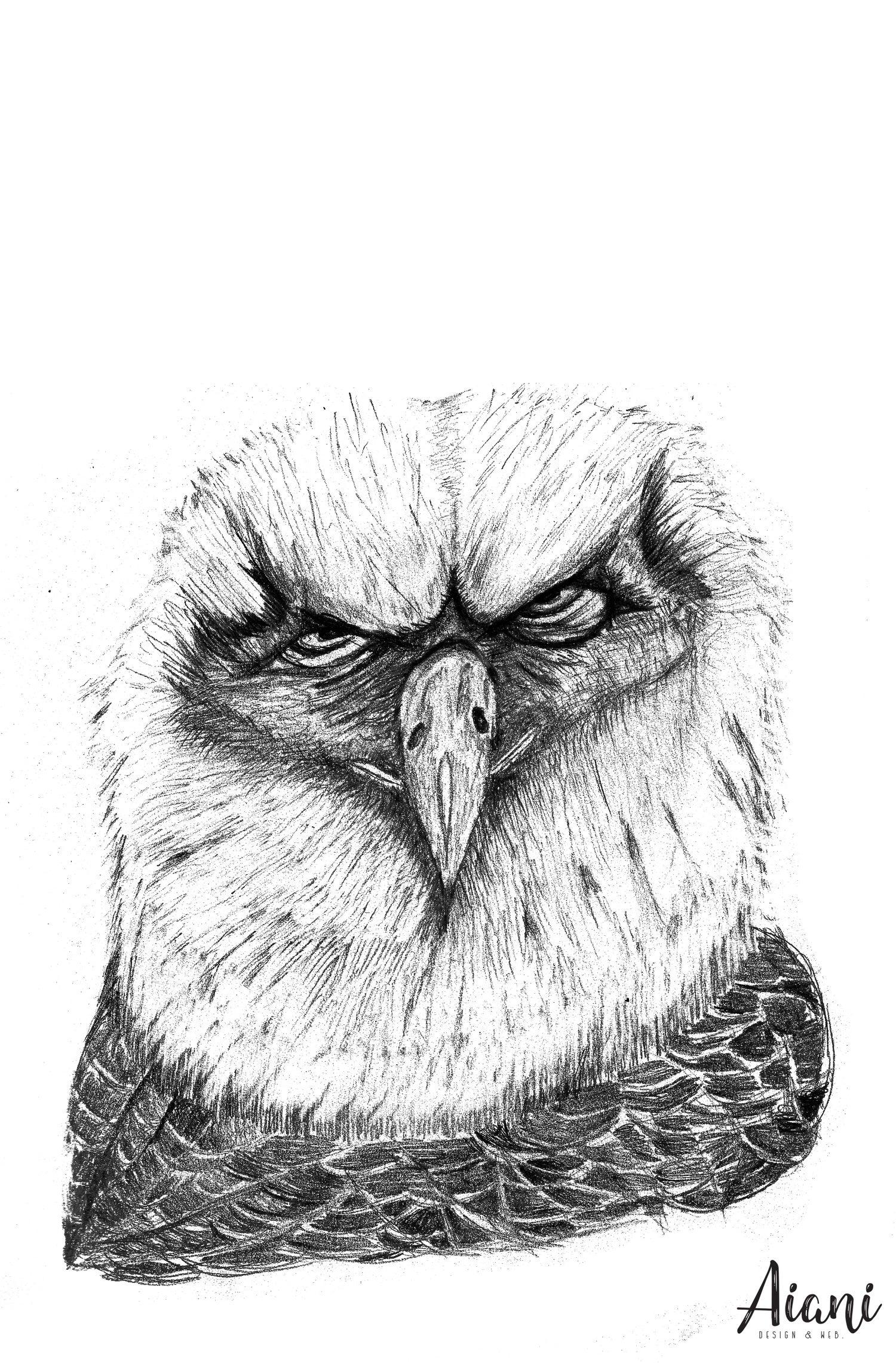 Image of Eagle Bird