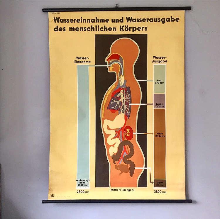 Image of German biology chart