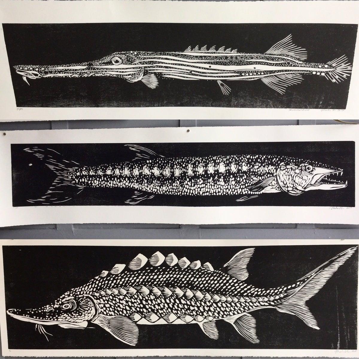 Image of Barracuda (center)