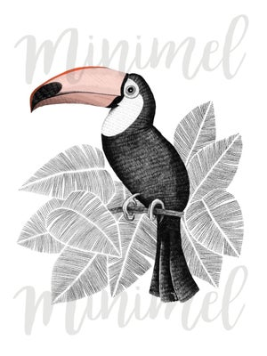 Image of Affiche Toucan A3 / Toucan A3 poster