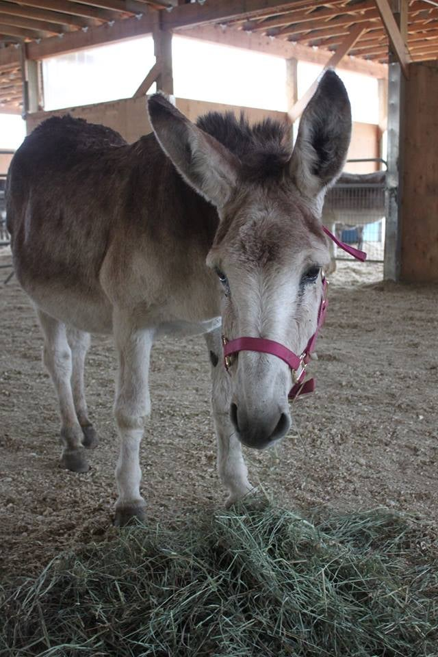 Image of Donate to the Donkeys