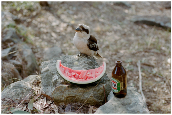 Image of Thirsty Kookaburra