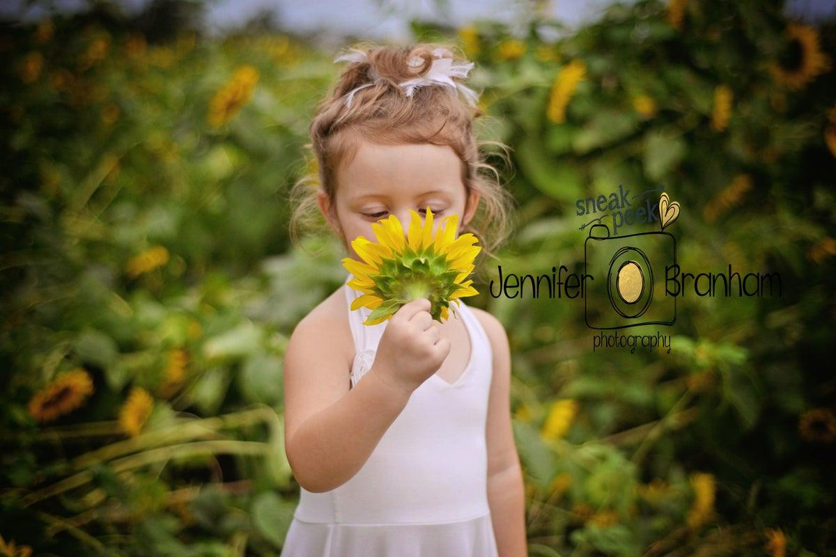 Image of Sunflower Field Minis