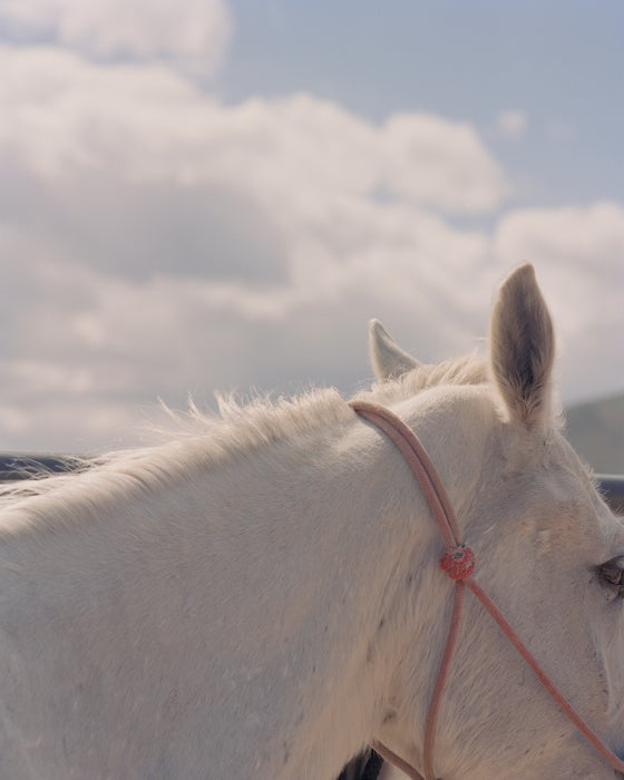 Image of Wild Horse in Washoe Valley (white)