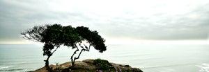 Image of Landscape n° 14
