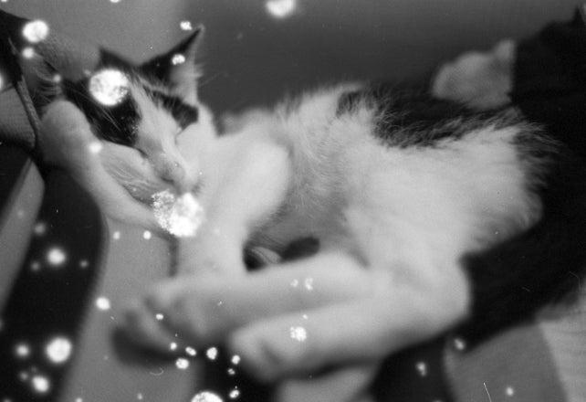 Image of Snovlox Black&White Film