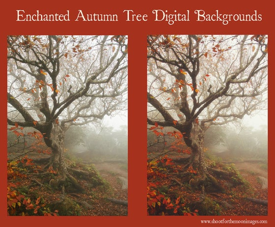 Image of ENCHANTED AUTUMN TREE DIGITAL BACKGROUNDS