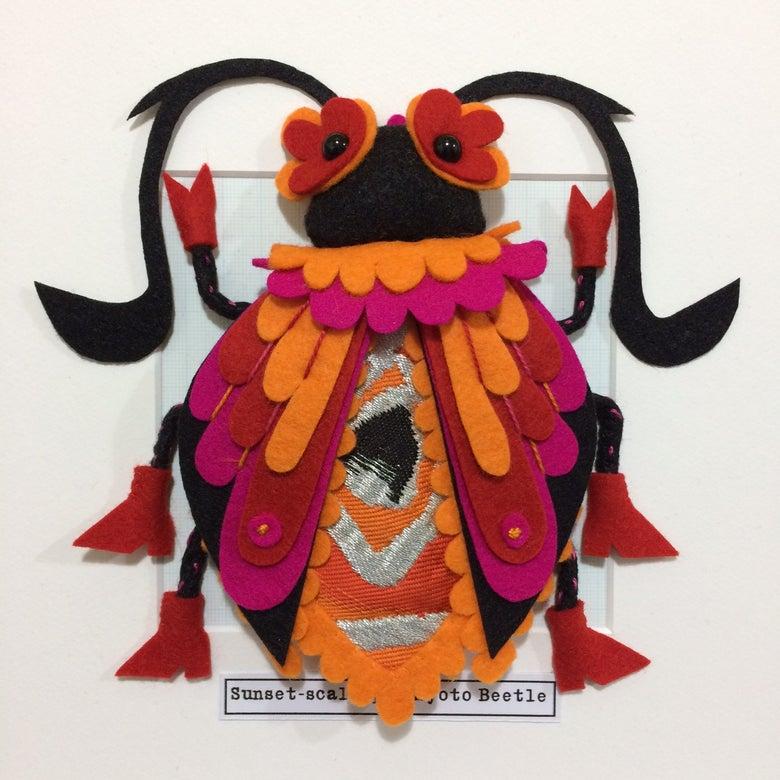 Image of Sunset-scalloped Kyoto Beetle