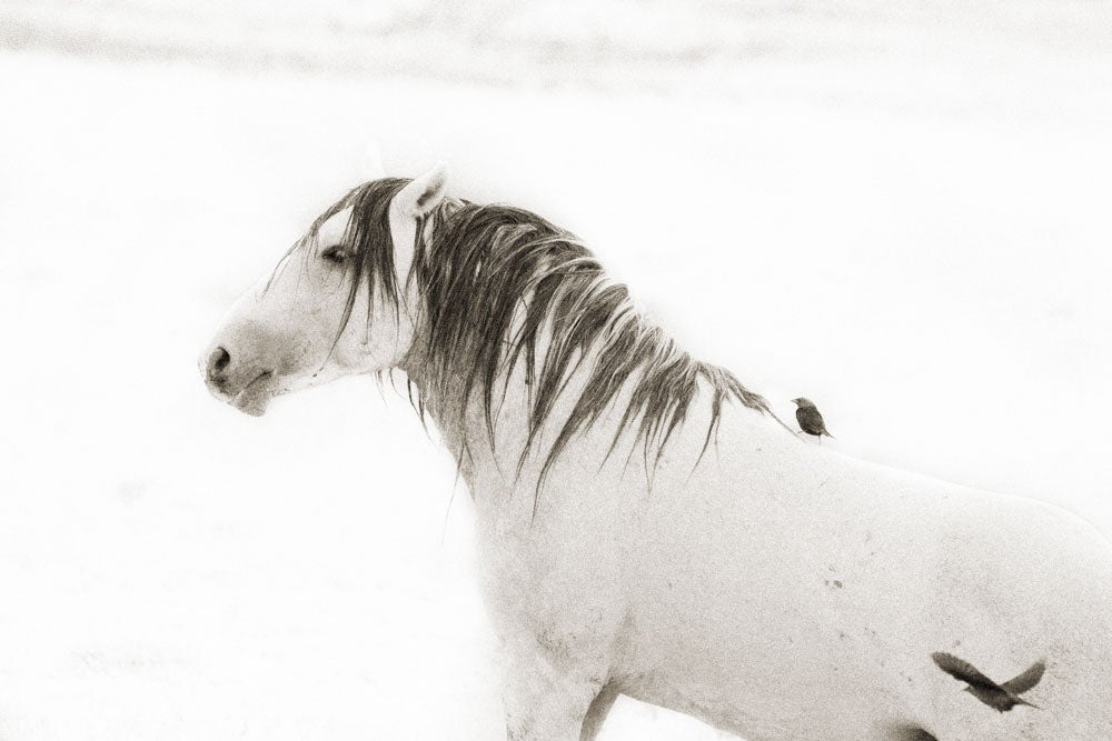 Image of Stallion With Feathered Friends
