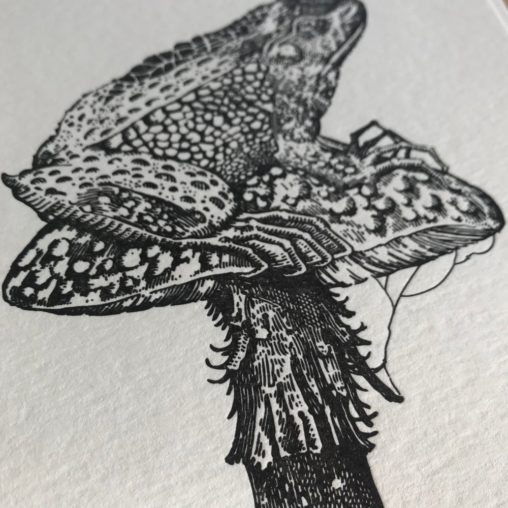 Image of Fungi and the toad.
