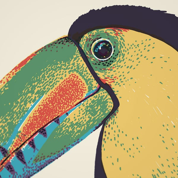 KEEL-BILLED TOUCAN - Sorry.