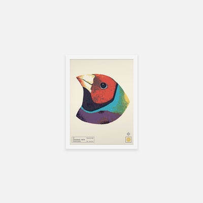 GOULDIAN FINCH - Sorry.