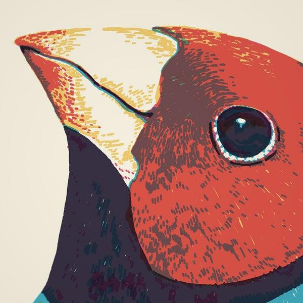 4 Beak Morphology Prints - Sorry.