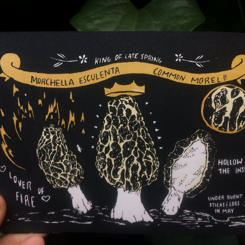 Image of Fungicopia: Learning About Edible Mushrooms