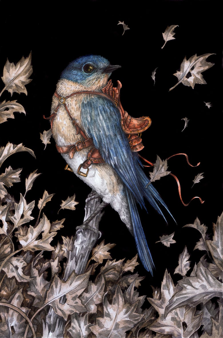 Image of 'The Saddled Bluebird' by Adam Oehlers