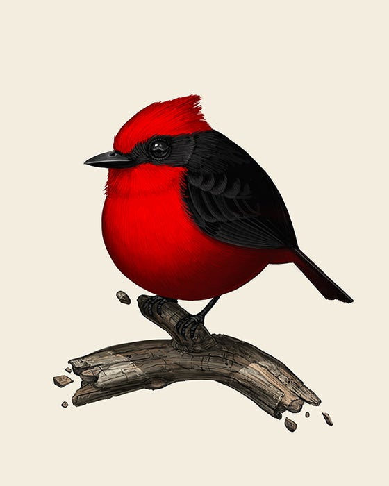 Image of Vermillion Flycatcher | Print