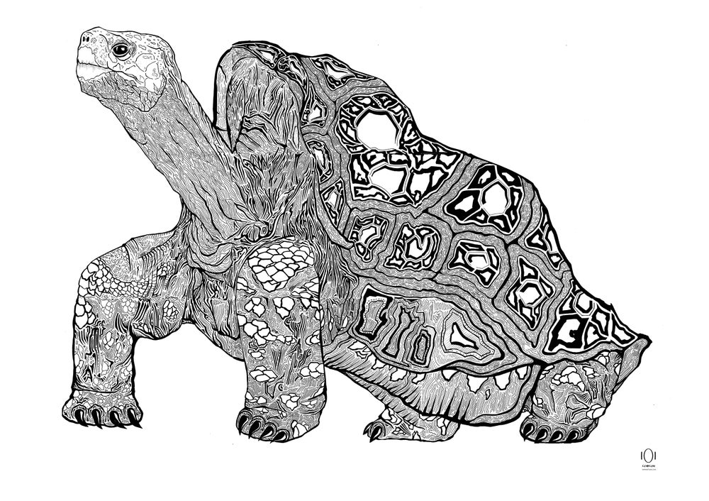 Image of Lonesome George print