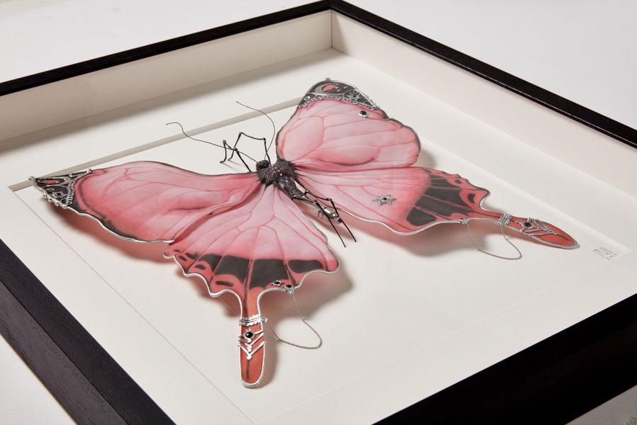 Image of Shakti Butterfly