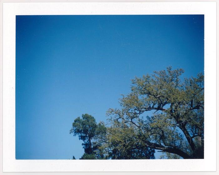 Image of Oak & Pine