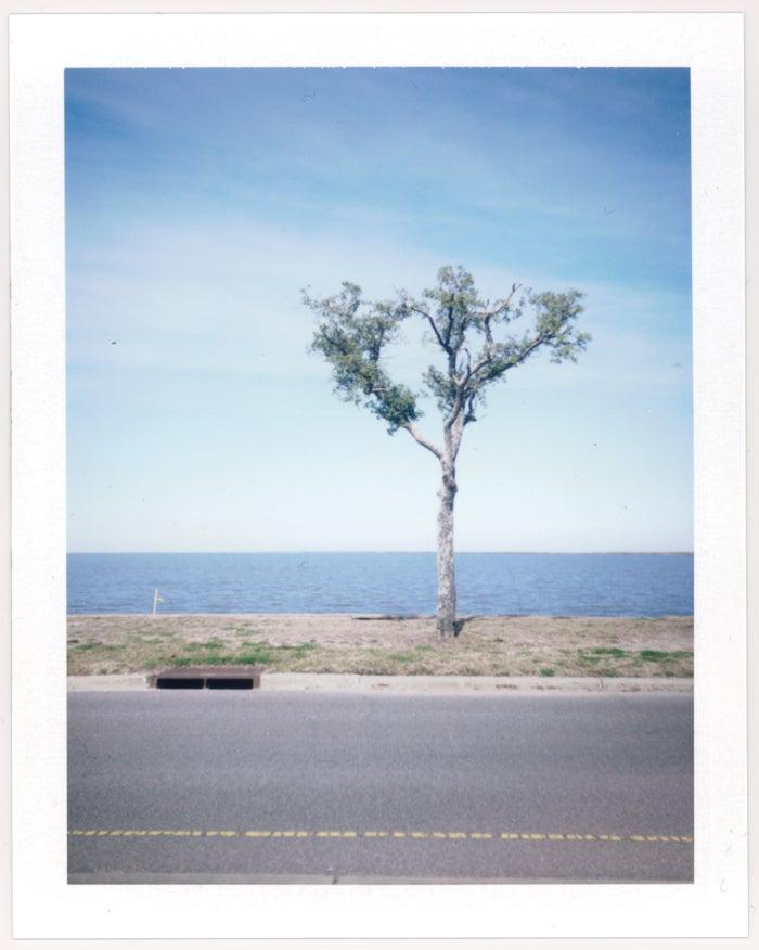 Image of Tree & Catch Basin