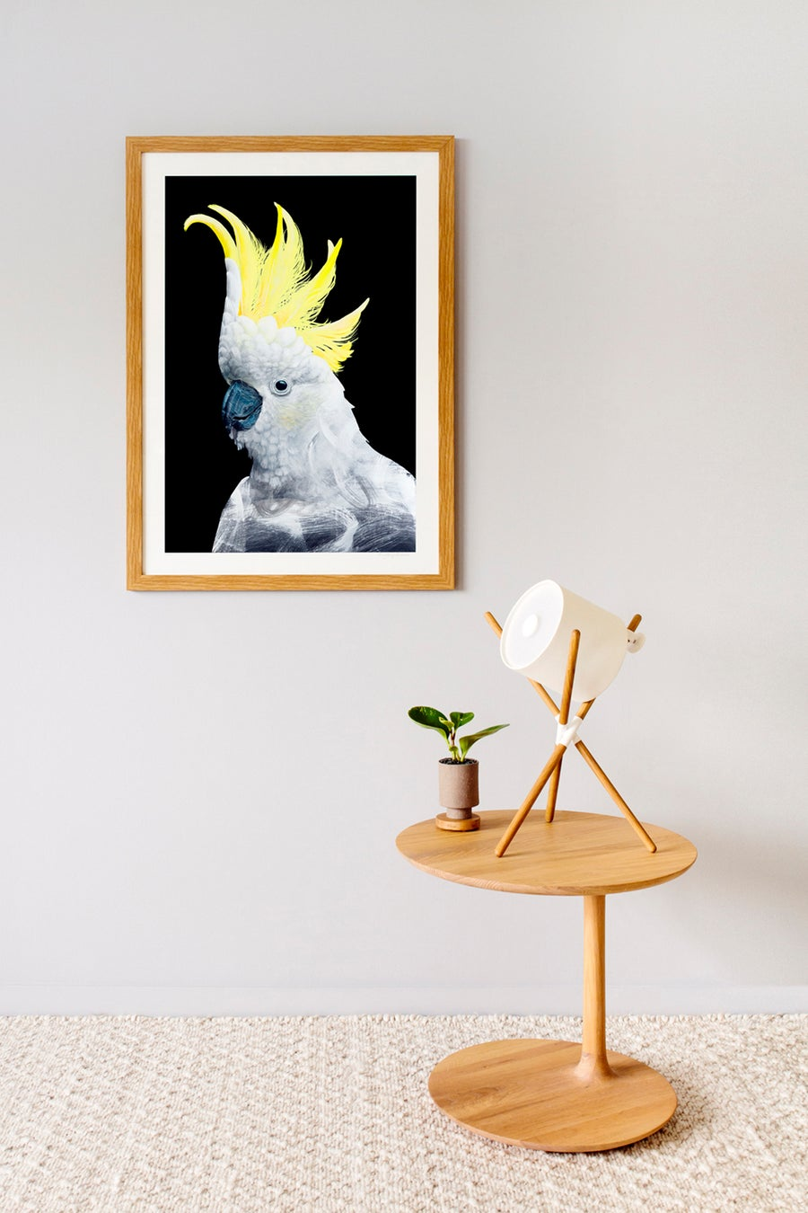 Image of Sulphur Crested Cockatoo