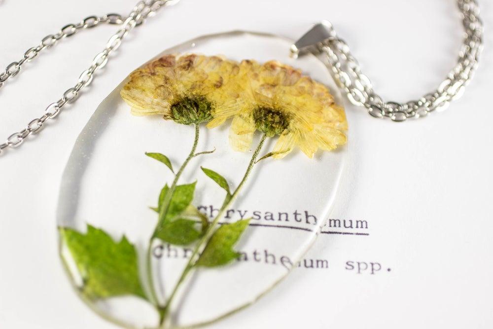 Image of Chrysanthemum (Chrysanthemum grandiflorum) - Large Oval #1