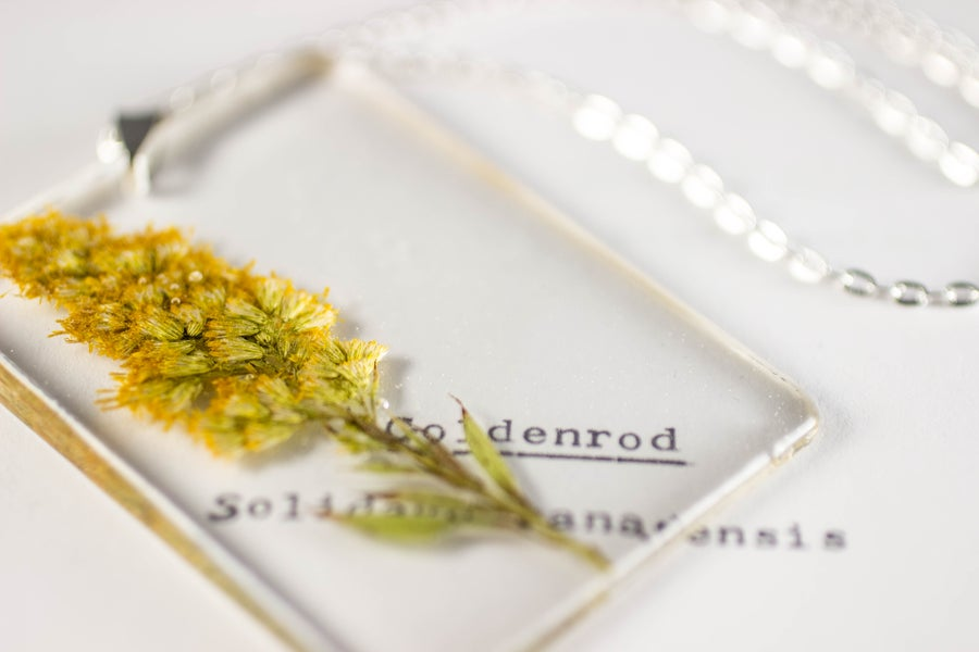 Image of Goldenrod (Solidago canadensis) - Large #4