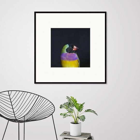 Image of Rainbow & Black Birdie