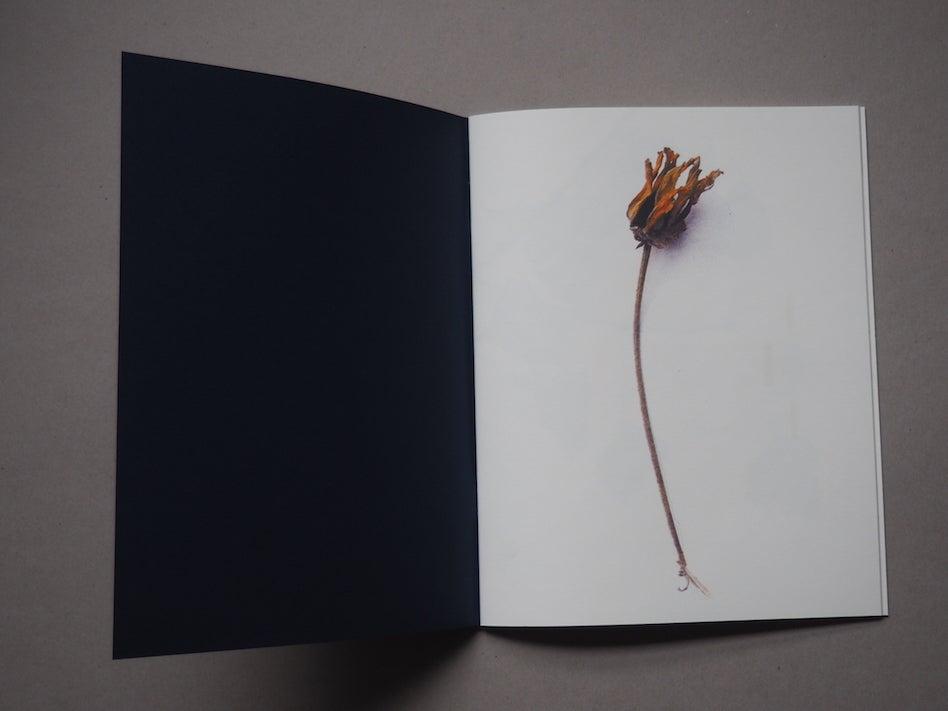 Image of Des plantes