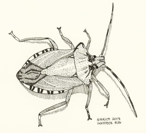 Image of Inktober #26 - Stink Bug