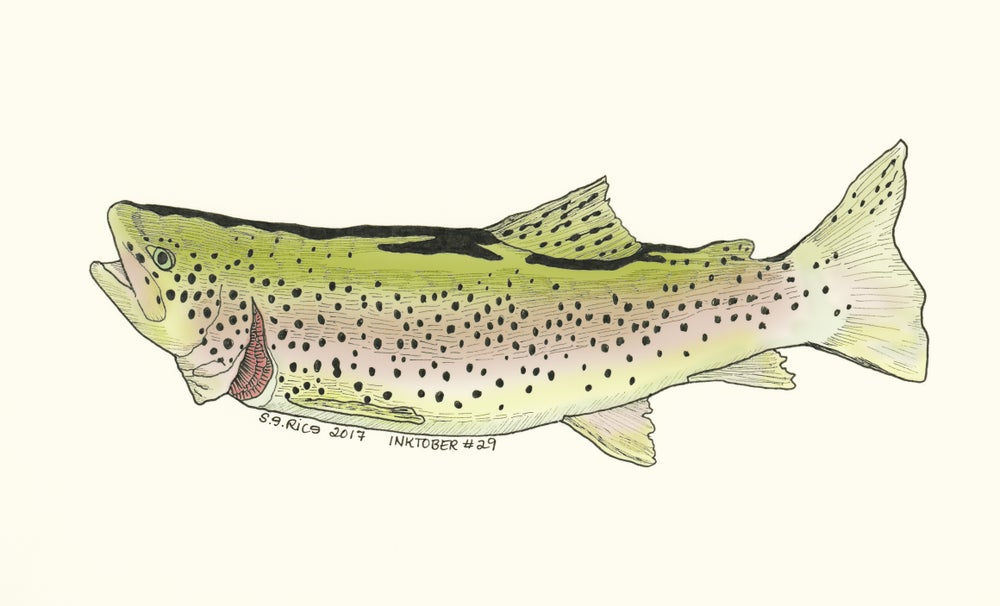 Image of Inktober #29 - Trout (2 versions)