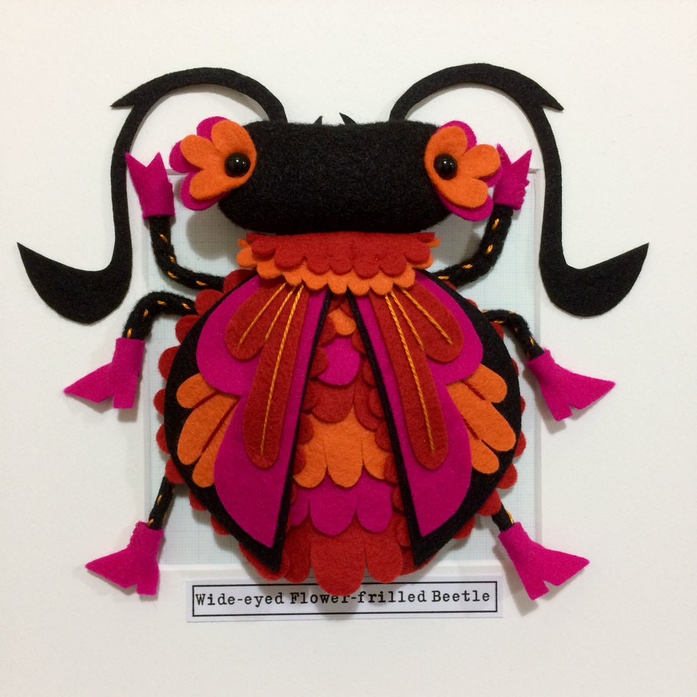 Image of Wide-eyed Flower-frilled Beetle