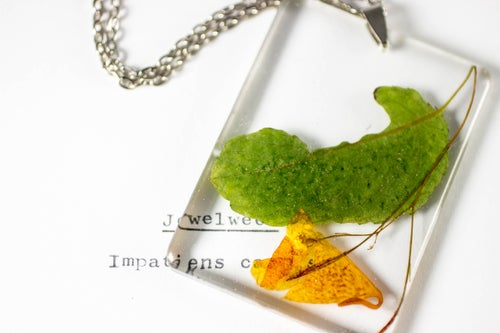 Image of Jewelweed (Impatiens capensis) - Large #1