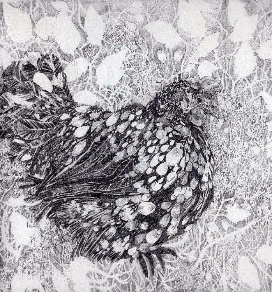 Image of Speckled Hen