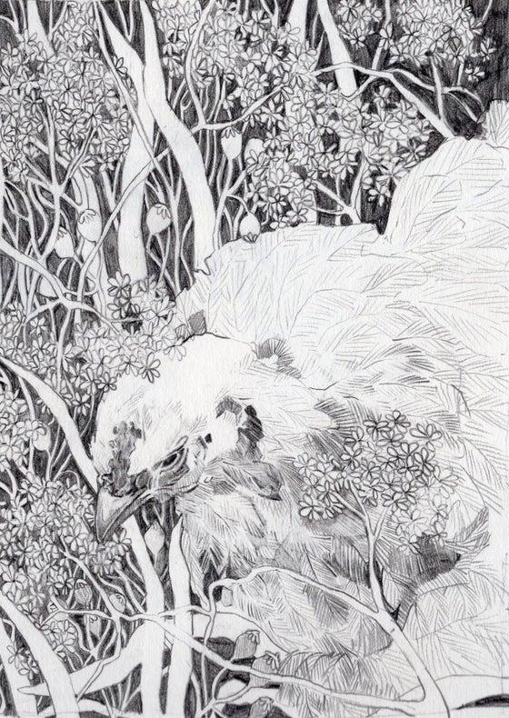 Image of Chicken Head