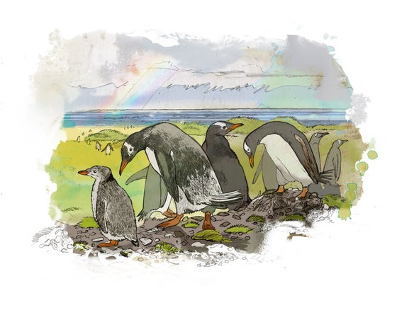 Image of Rainbow Birds