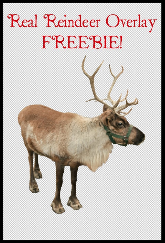 Image of Real Reindeer Overlay FREEBIE