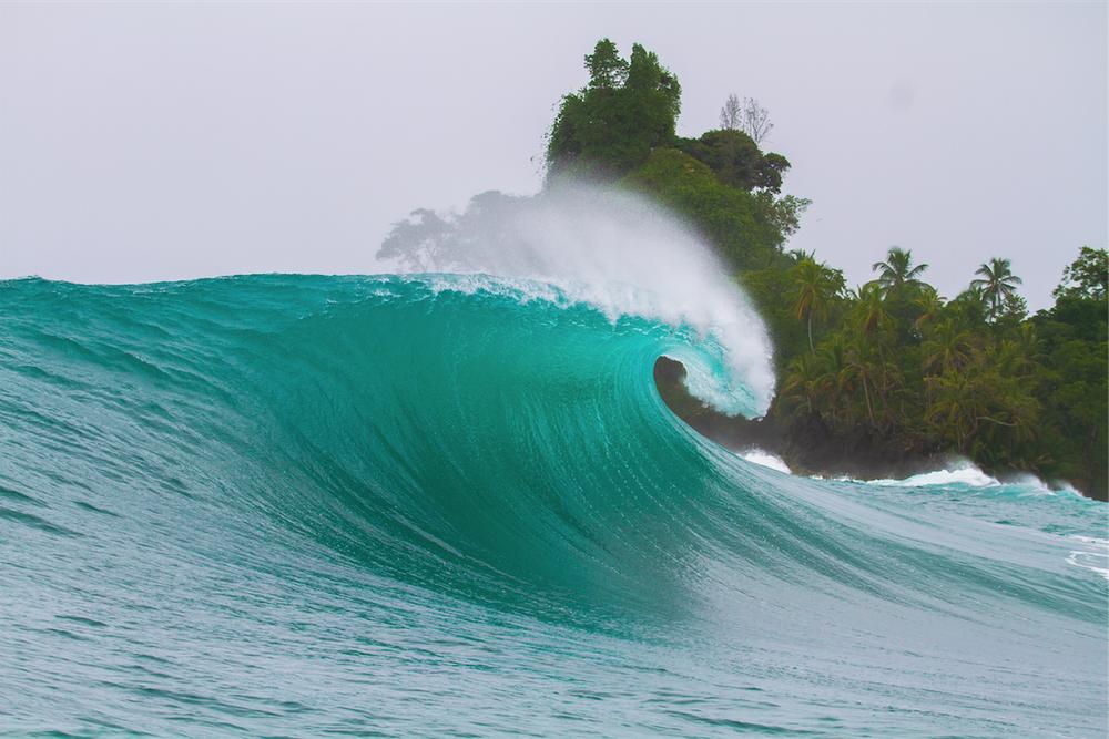 Image of Silverbacks, Caribbean