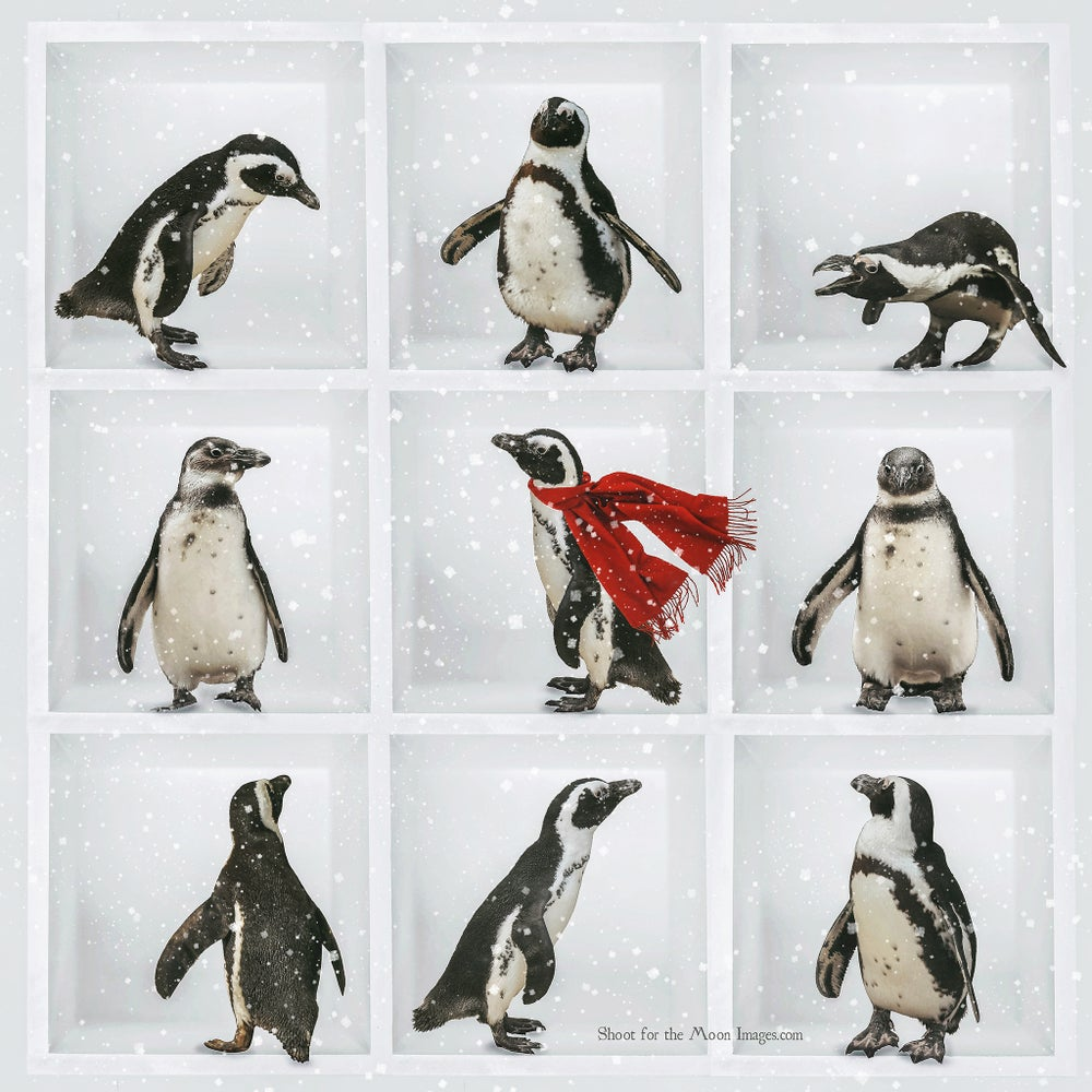 Image of Penguin Pack
