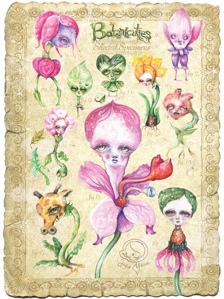 Image of 'BOTANICUTIES SELECTED SPECIMENS' Print