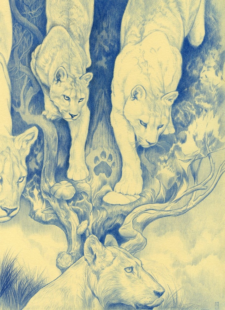 Image of Dream of a Lioness
