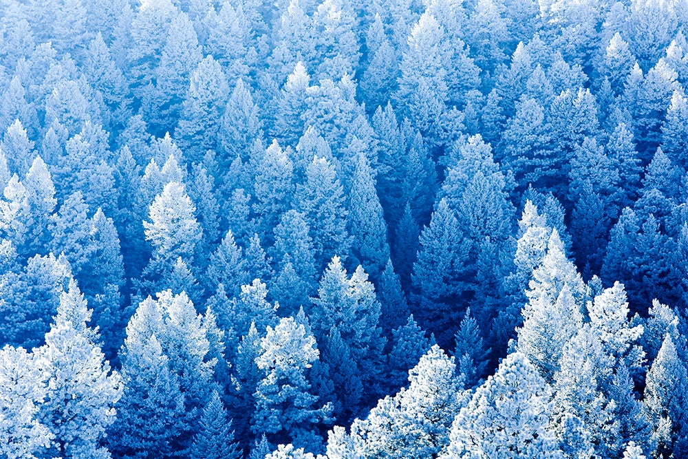 Image of Deep roots are not reached by the frost