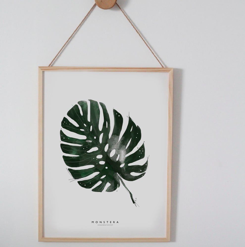 Image of MONSTERA ILLUSTRATION