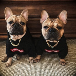 Image of Frenchie Dog Hoodie
