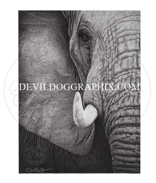 Image of ELEPHANT DRAWING PRINT