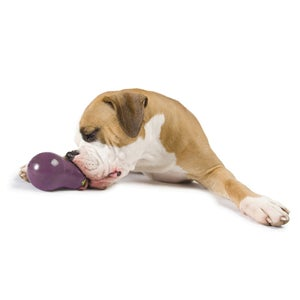 Image of Planet Dog Eggplant in the category  on Uncommon Paws.