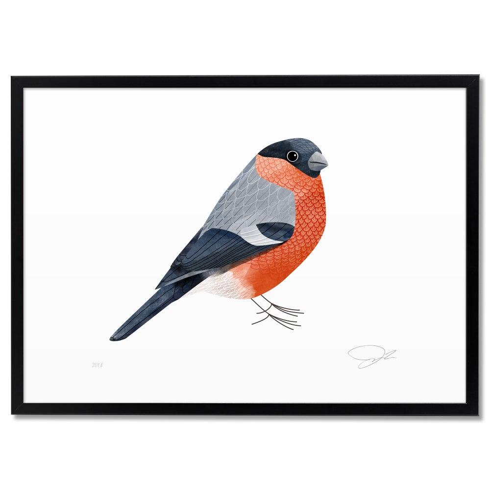 Image of Print: Bullfinch