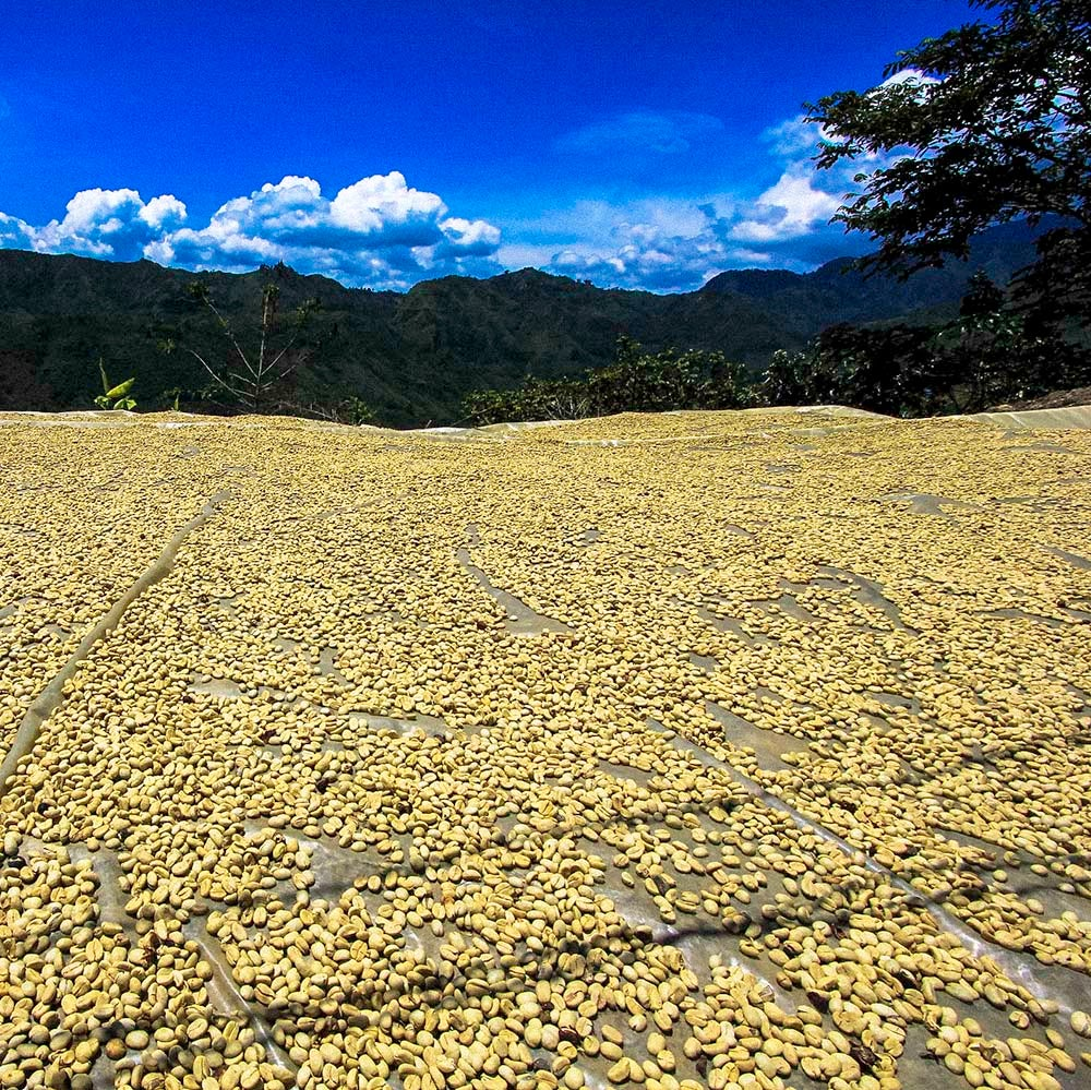 Image of Colombia Nariño Excelso-La Union