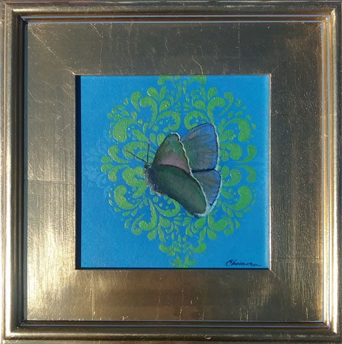 Image of Koa Butterfly No. 2 (8 in x 8 in)