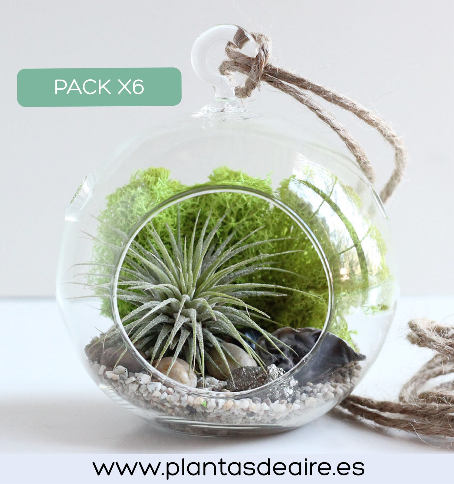 Image of PACK 6 TERRARIOS